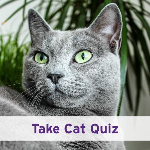 Take Cat Quiz