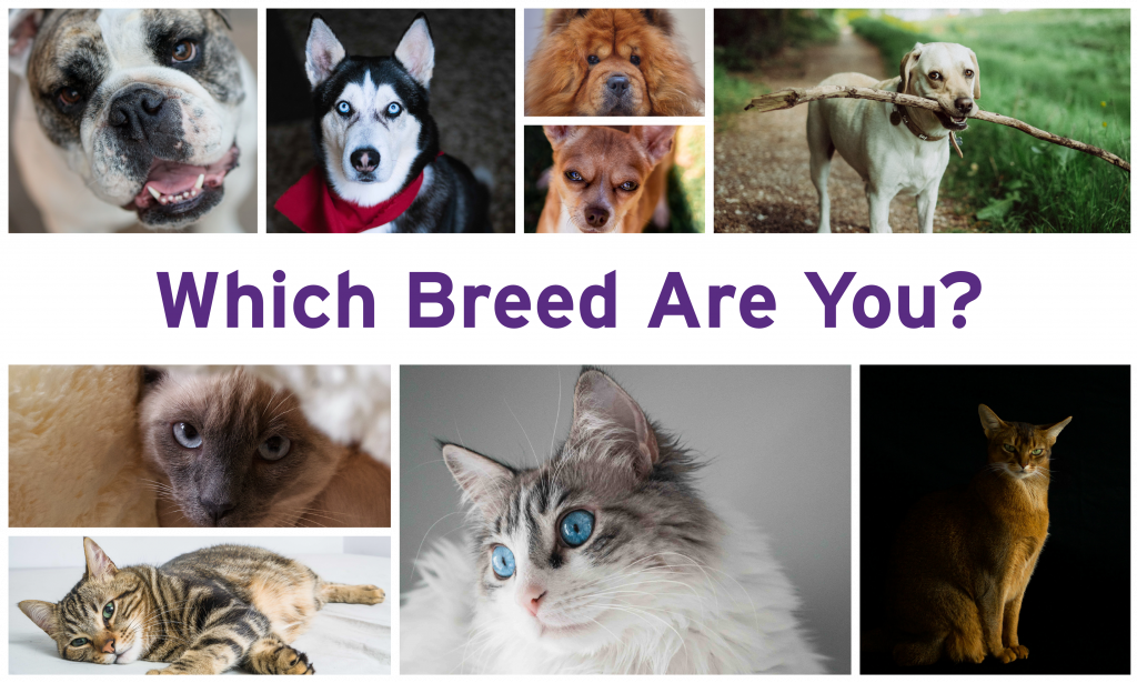 Which Breed Are You?