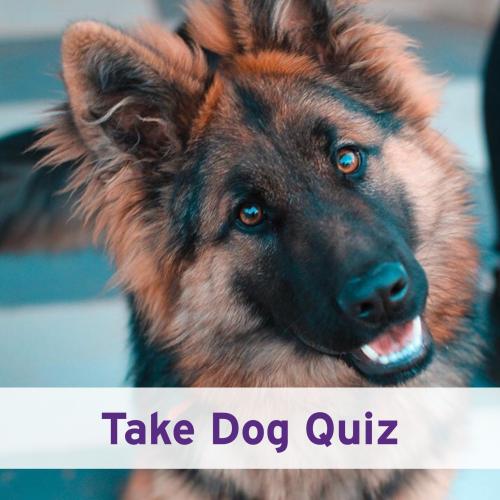Take Dog Quiz